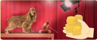 """I cani di razza <a href=""""../cane-cane-lupo-cecoslovacco-38/"""" title="""""""">Cane Lupo Cecoslovacco</a> disponibili sul mercato al migliore offerente"""