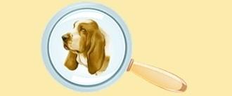 "I cani di razza <a href=""../cane-cane-lupo-cecoslovacco-38/"" title="""">Cane Lupo Cecoslovacco</a> in vendita"